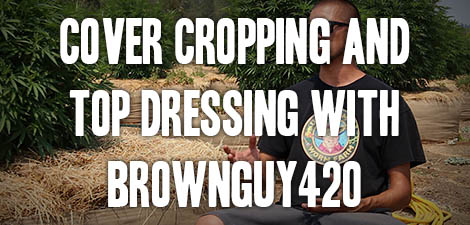 No-Till Cover Cropping and Top Dressing with BrownGuy420