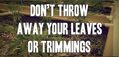 Don't Throw Away Your Leaves or Trimmings