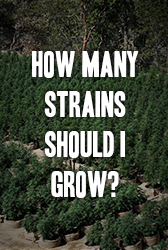 How Many Strains Should I Grow