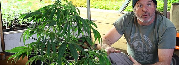 Kevin Jodrey with cannabis plant.