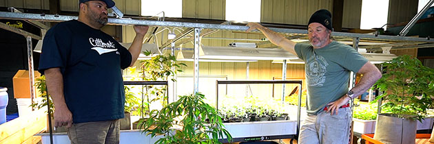 Kevin Jodrey with young plants in indoor grow area.