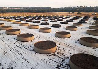 Shorty soil saver pots with soil.