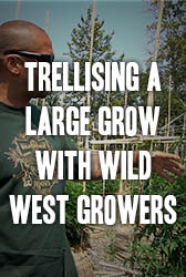 Trellising a Large Scale Grow with Wild West Growers