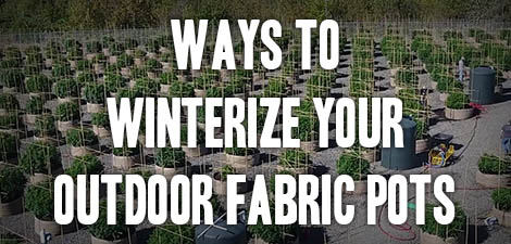 Ways to Winterize Your Outdoor Fabric Pots
