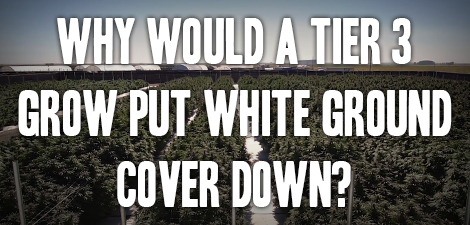 Why would a tier 3 grow put white ground cover down?